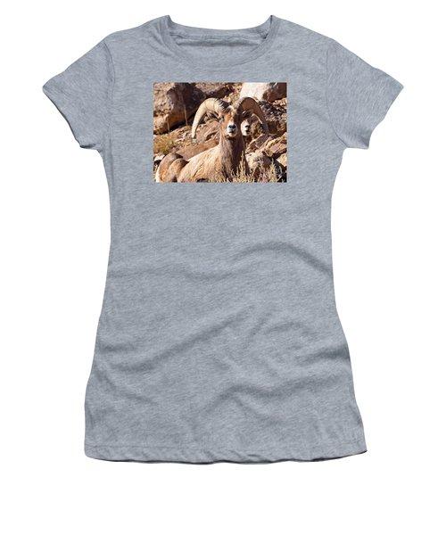 Desert Bighorn Sheep Women's T-Shirt (Junior Cut) by Nadja Rider