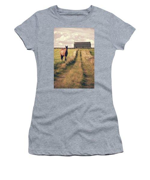 Horse In Field Women's T-Shirt