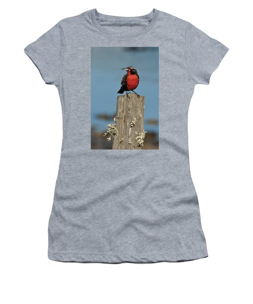 Male Long-tailed Meadowlark On Fencepost Women's T-Shirt (Athletic Fit)