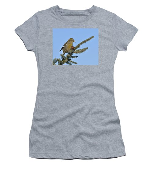 Spruce Cone Feeder Women's T-Shirt (Athletic Fit)