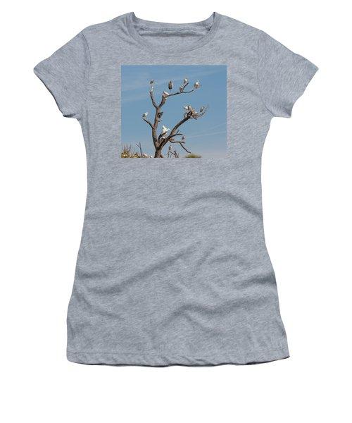 The Bird Tree Women's T-Shirt (Junior Cut) by John M Bailey