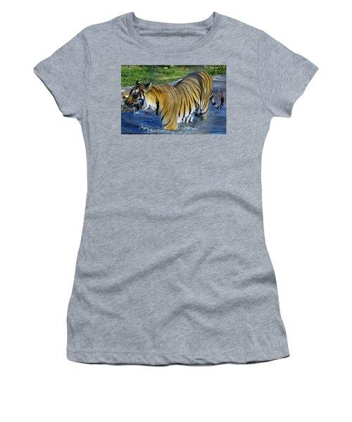 Tiger 4 Women's T-Shirt