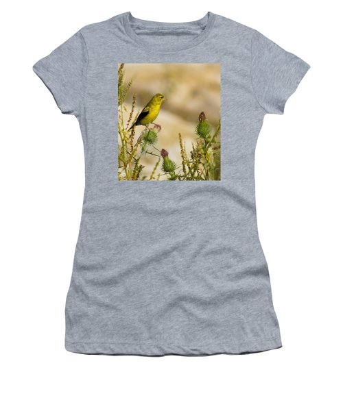 Goldfinch On Lookout Women's T-Shirt (Junior Cut) by Bill Pevlor