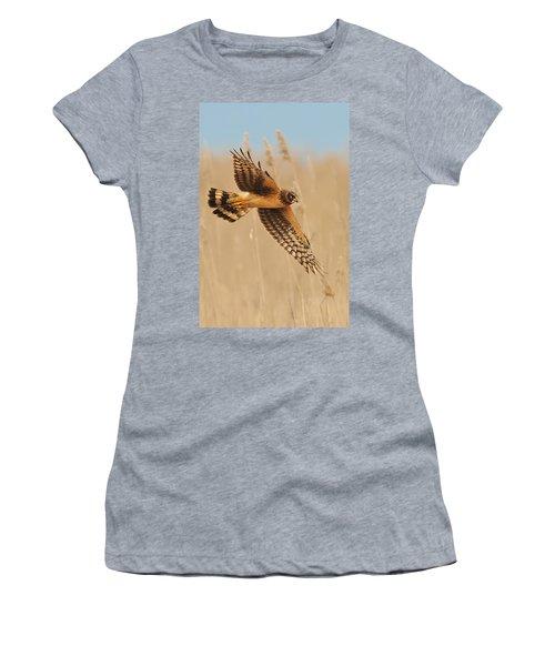 Harrier Over Golden Grass Women's T-Shirt