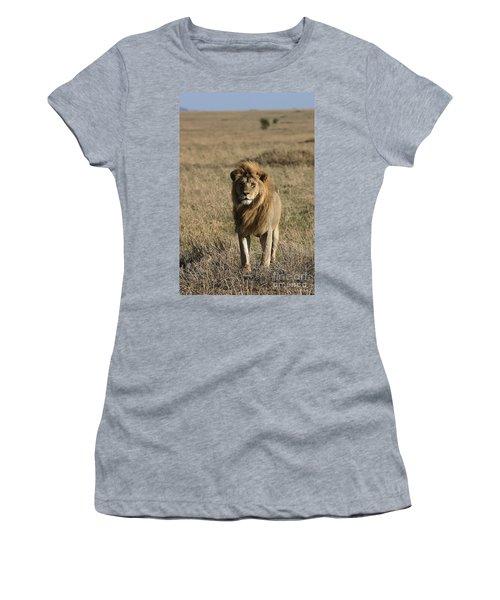Male Lion's Gaze Women's T-Shirt (Junior Cut) by Darcy Michaelchuk