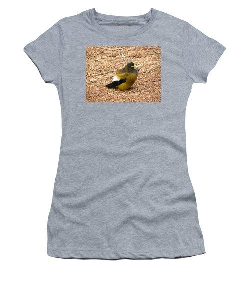 Evening Grossbeak Divide Co Women's T-Shirt