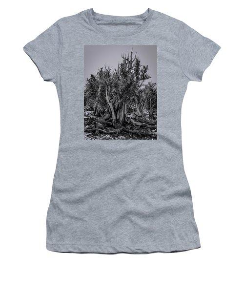 Ancient Bristlecone Pine Women's T-Shirt (Athletic Fit)