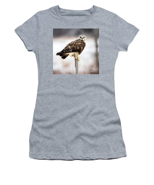 Rough-legged Hawk Women's T-Shirt