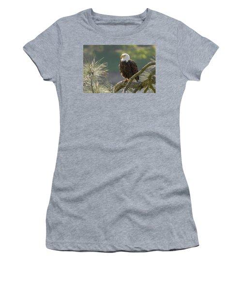 Bald Eagle Women's T-Shirt (Junior Cut) by Doug Herr