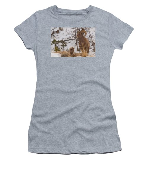Bighorn Ram And Kid Women's T-Shirt