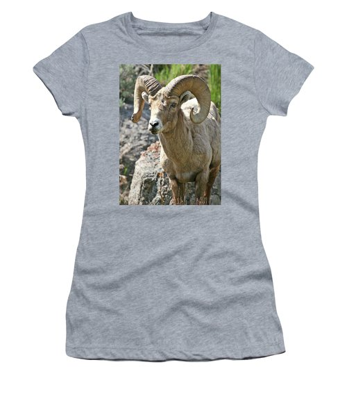 Women's T-Shirt featuring the photograph Bighorn Sheep by Wesley Aston