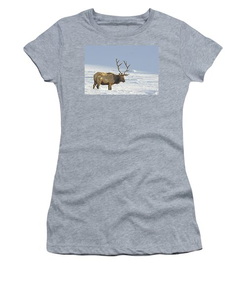 Bull Elk In Snow Women's T-Shirt
