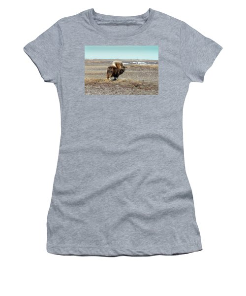 Bull Musk Ox Women's T-Shirt (Athletic Fit)
