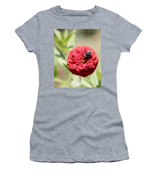 Bumble Bee On Zinnia Women's T-Shirt