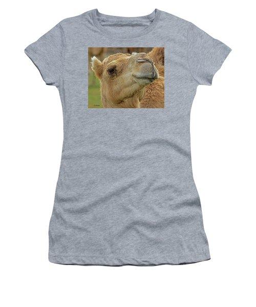 Dromedary Or Arabian Camel Women's T-Shirt
