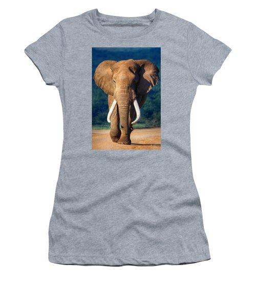 Elephant Approaching Women's T-Shirt (Junior Cut) by Johan Swanepoel
