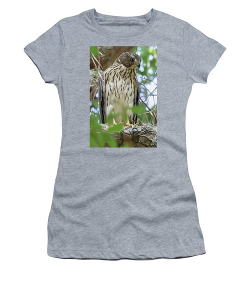 Fledgling Red-shouldered Hawk 2 Women's T-Shirt