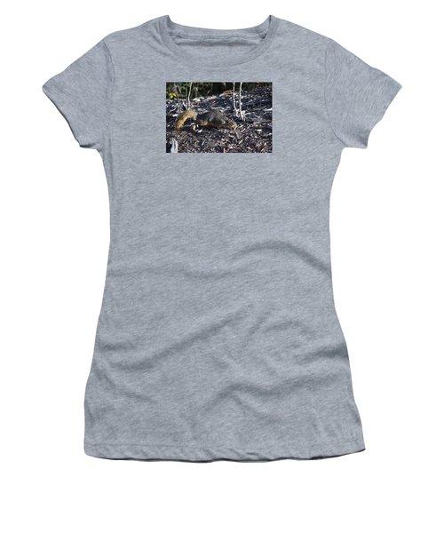 Squirrel Pprh Woodland Park Co Women's T-Shirt