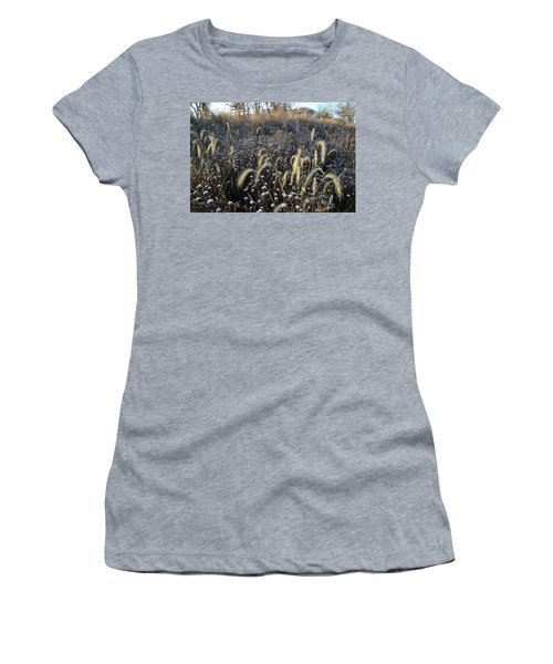 Frosted Foxtail Grasses In Glacial Park Women's T-Shirt (Athletic Fit)