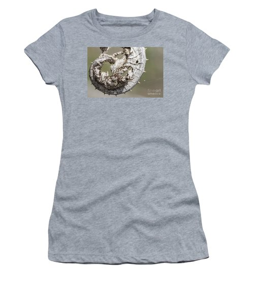 Women's T-Shirt (Junior Cut) featuring the photograph Furrow Orb Weaver On A Dry Thisle Leaf by Jivko Nakev