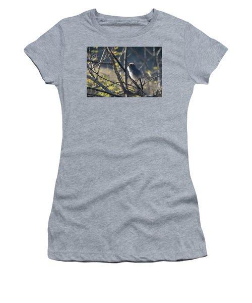 Gnatcatcher Women's T-Shirt (Athletic Fit)
