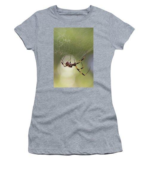 Golden-silk Spider Women's T-Shirt (Athletic Fit)