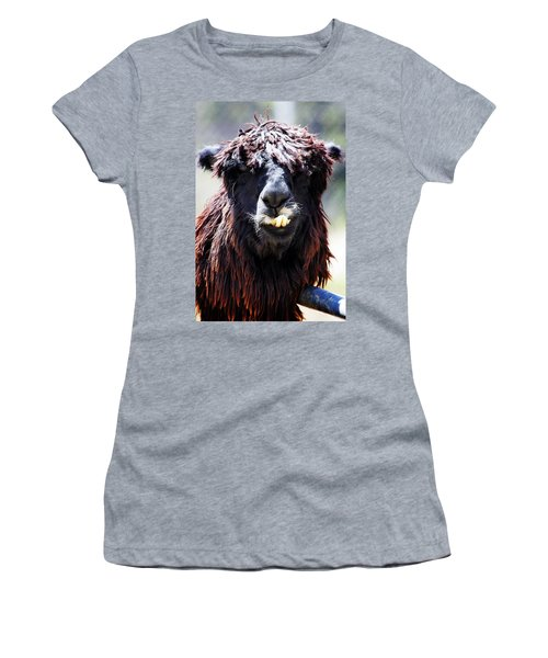 Women's T-Shirt (Junior Cut) featuring the photograph Is Your Mama A Llama? by Anthony Jones