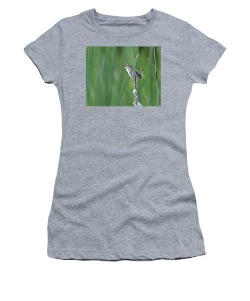 Marsh Wren Women's T-Shirt (Athletic Fit)