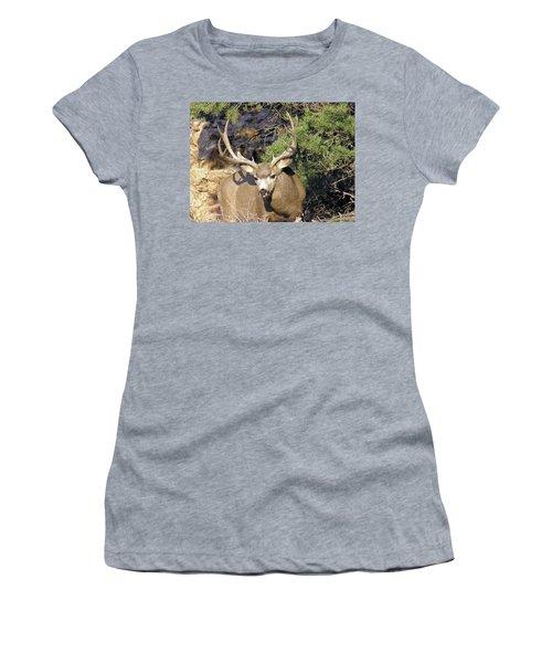 Muledeerbuck6 Women's T-Shirt