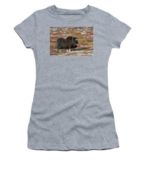 Muskox Women's T-Shirt