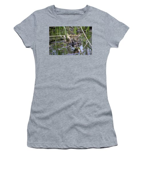 Northern Waterthrush Women's T-Shirt (Athletic Fit)