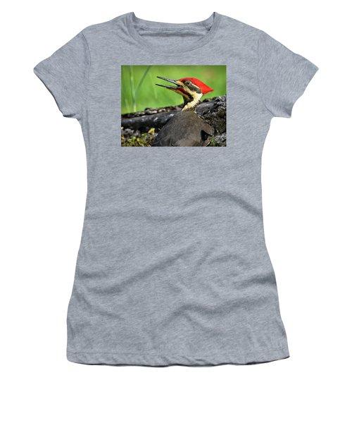 Pileated Women's T-Shirt (Junior Cut) by Douglas Stucky