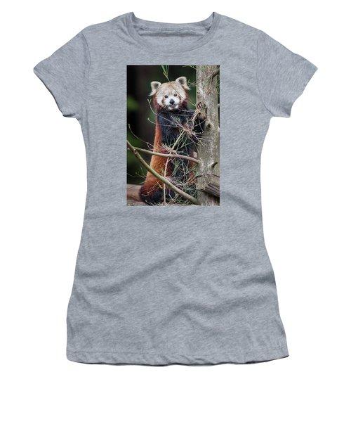 Portrat Of A Content Red Panda Women's T-Shirt (Junior Cut) by Greg Nyquist
