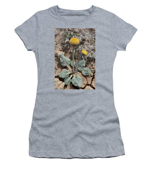 Rayless Daisy Women's T-Shirt (Junior Cut) by Jenessa Rahn
