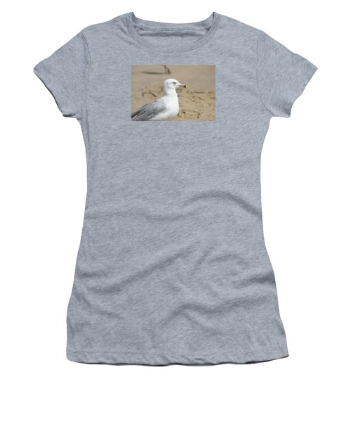 Ring-billed Gull Women's T-Shirt (Athletic Fit)