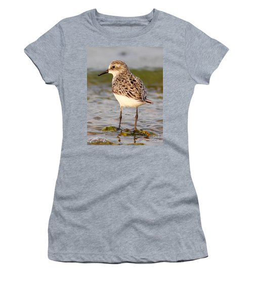 Sandpiper Portrait Women's T-Shirt (Athletic Fit)