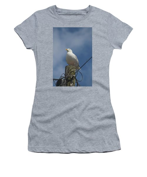 Seagull Perching. Women's T-Shirt