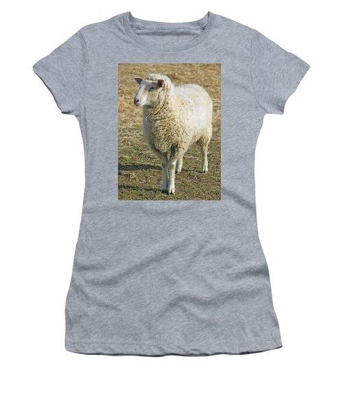 Sheep Women's T-Shirt (Junior Cut) by James Larkin
