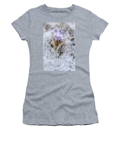 Snowy Pasqueflower Morning Women's T-Shirt (Athletic Fit)
