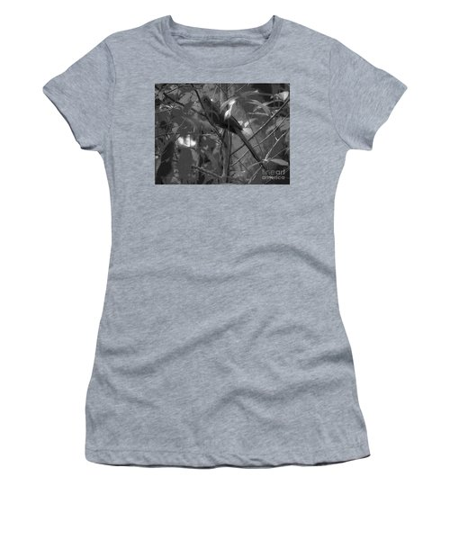 Squirrel Cuckoo  Women's T-Shirt