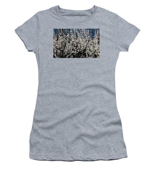 Sunlit Apricot Blossoms Women's T-Shirt (Junior Cut) by Will Borden