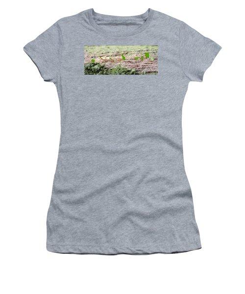 The Leaf Parade  Women's T-Shirt (Junior Cut) by Betsy Knapp