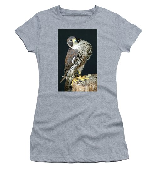 The Proud Falcon Women's T-Shirt