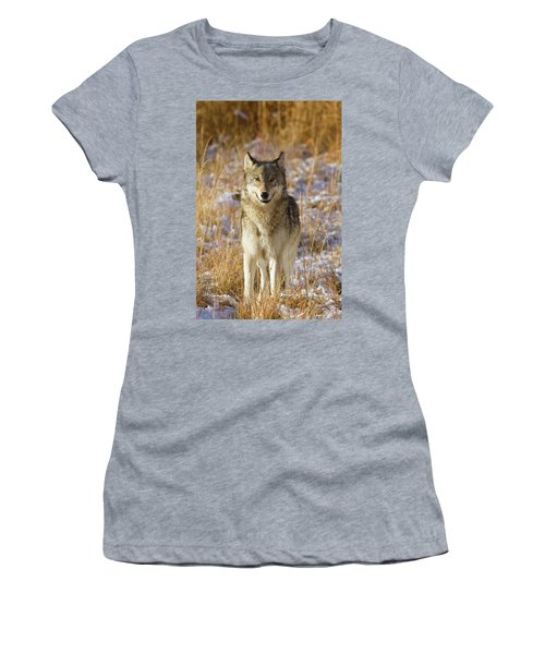 Wild Wolf Portrait Women's T-Shirt