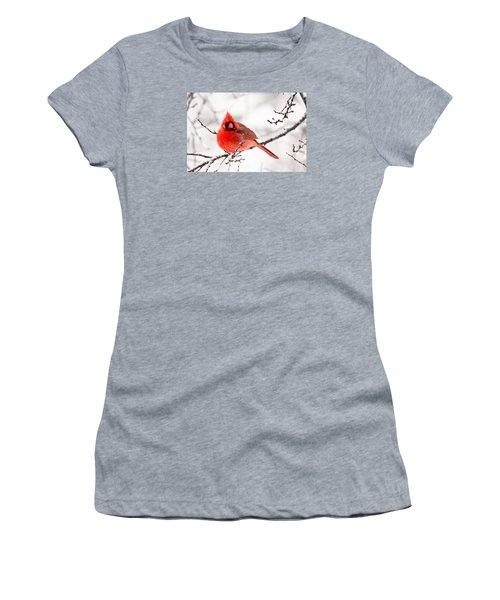 Women's T-Shirt (Junior Cut) featuring the photograph Winter Cardinal by Trina Ansel