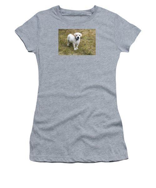 Yellow Labrador Puppy At Wanting To Play. Women's T-Shirt