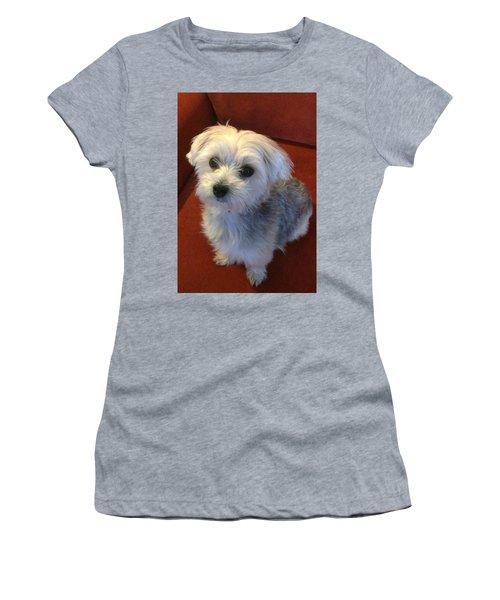 Yorkshire Terrier Women's T-Shirt (Junior Cut) by Robin Regan