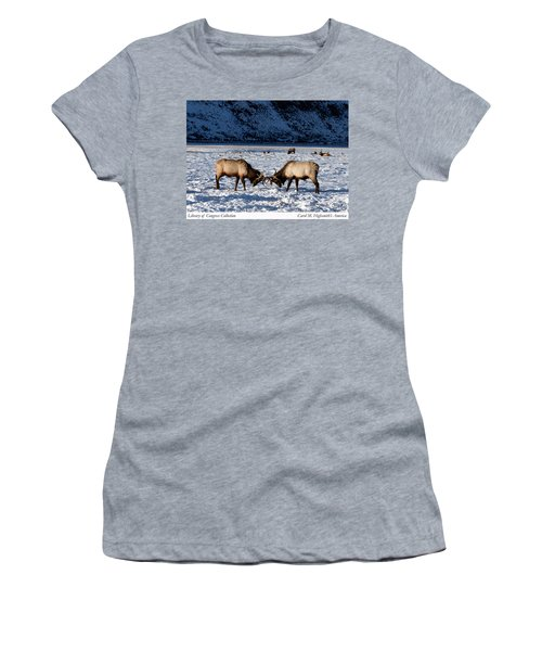 Young Bull Elk In Jackson  Hole In Wyoming Women's T-Shirt (Athletic Fit)
