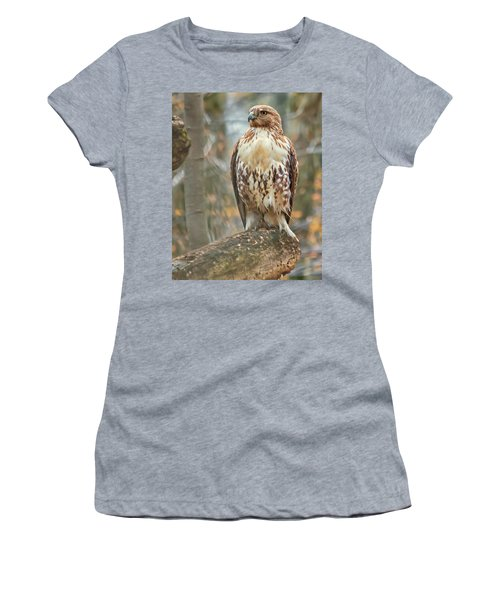 Young Red Tailed Hawk  Women's T-Shirt