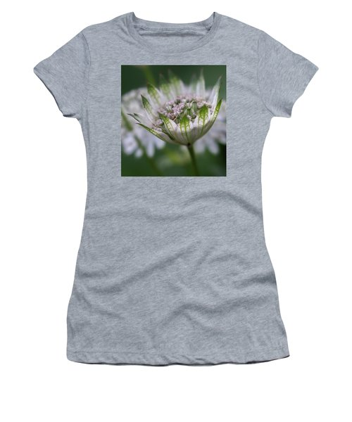 Astrantia Women's T-Shirt
